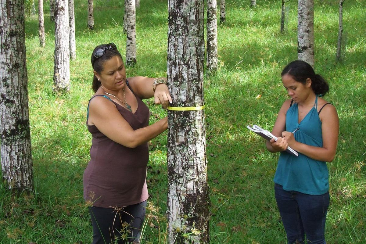 Tropical Forest Ecosystem and Agroforestry Management